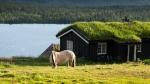 Landschaft Norwegen mit Pferd